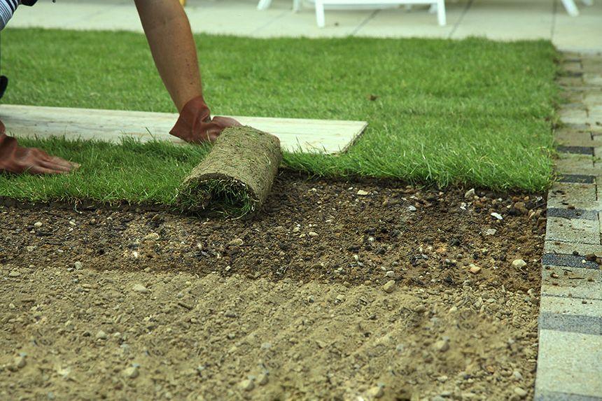 Как сажать рулонный газон осенью 60